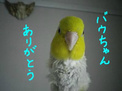 snap_0125juju_201411122243.jpg