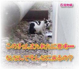 職場付近の野良猫さん
