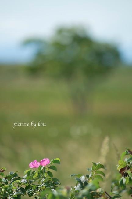 201208ki-f.jpg