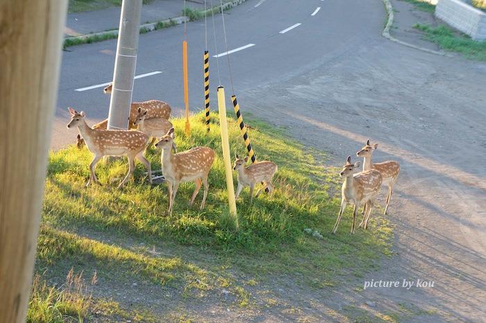 201208no-sika2.jpg