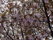 2013.05.18 マルシェ4