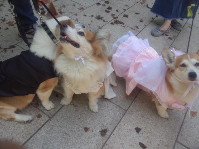 結婚式で チュウ