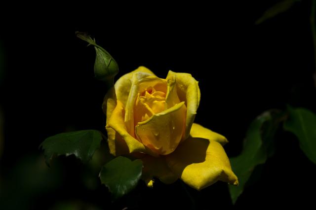 20130531-D3S_4164.jpg