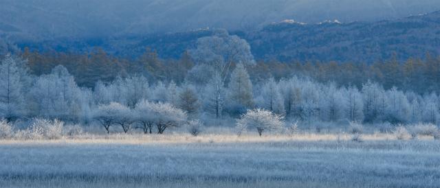 霧氷の花咲く小田代ヶ原