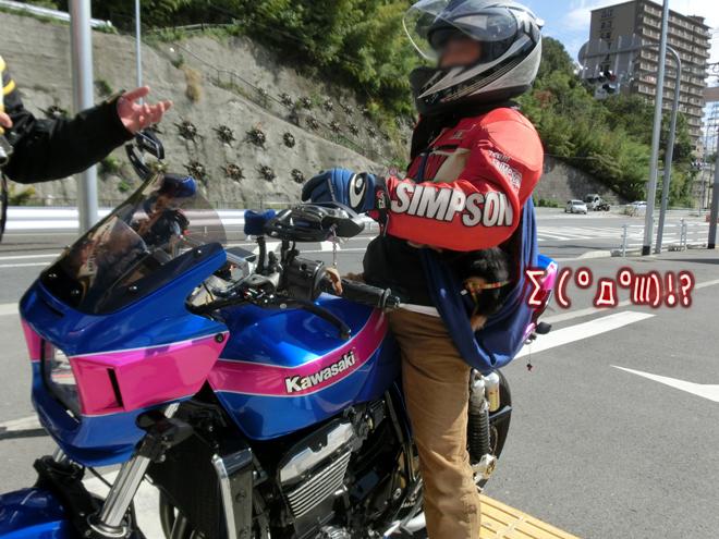 CIMG0356_20131024114256fa5.jpg