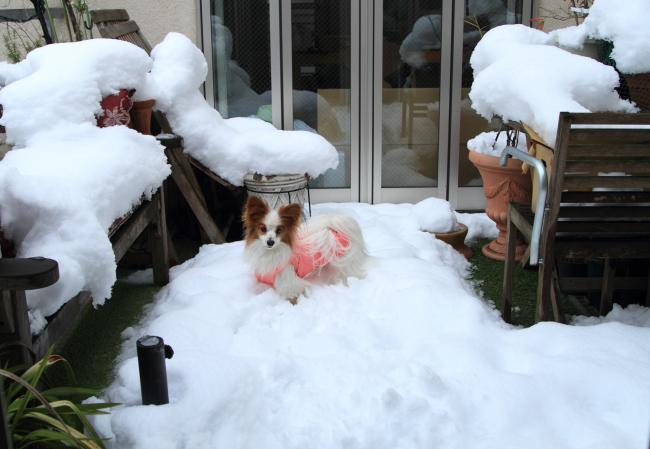 ベランダでの雪遊び 2.9.2014