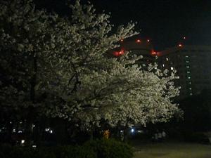 明大病院と桜 夜