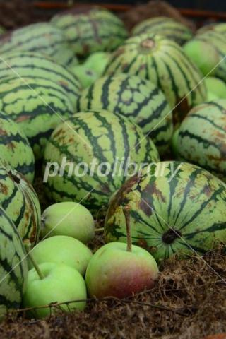 3380135 西瓜と林檎