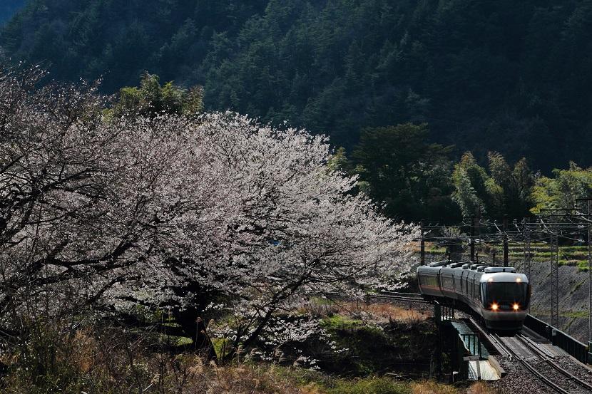 「しなの」の車窓から見る伊奈川さくら、いいだろうな!そんな花見もしてみたい!