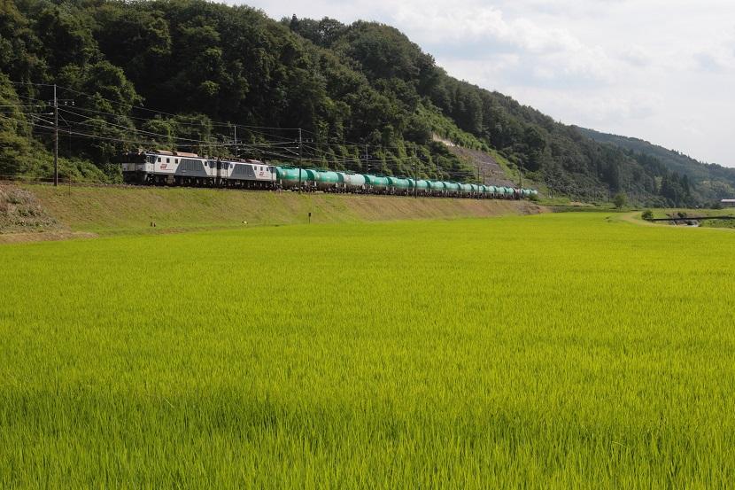 緑の絨毯のような釜戸の田園風景ですぜ!!