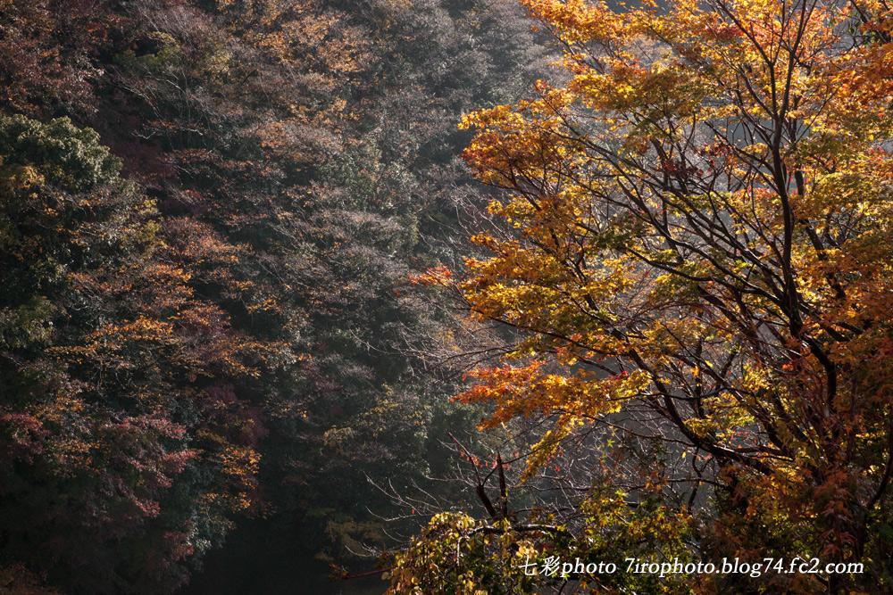 2014-11-30_千葉紅葉_0043_edited-1