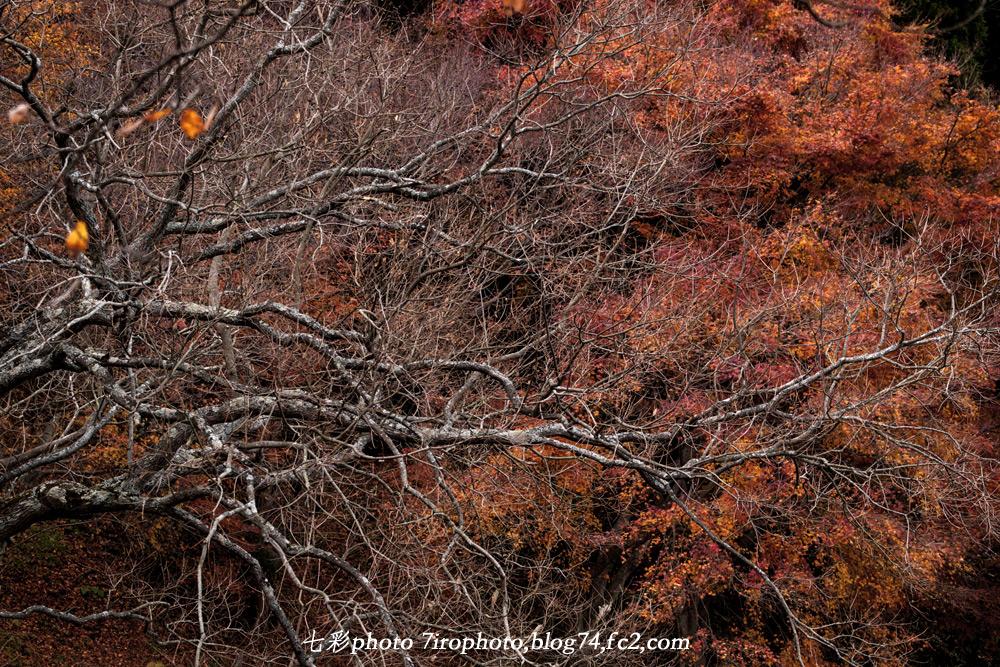 2014-12-12_伊豆_0055_edited-1