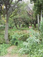 西郷山公園 木々