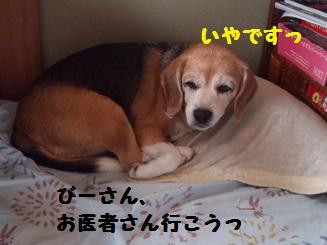 -1DSC_0523.jpg
