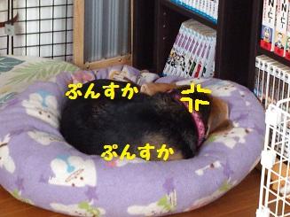 DSC_0534.jpg