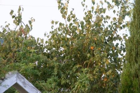 2013-10-26_39.jpg