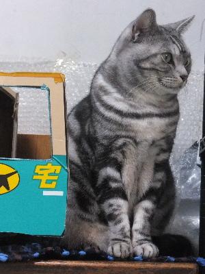 猫の置物?3