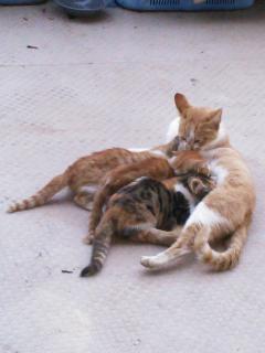 親猫&子猫