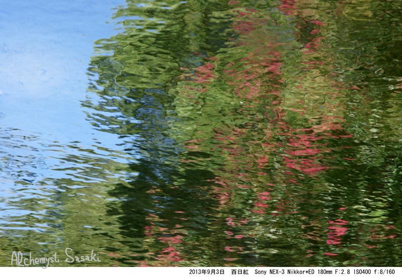 水辺の百日紅DSC00499