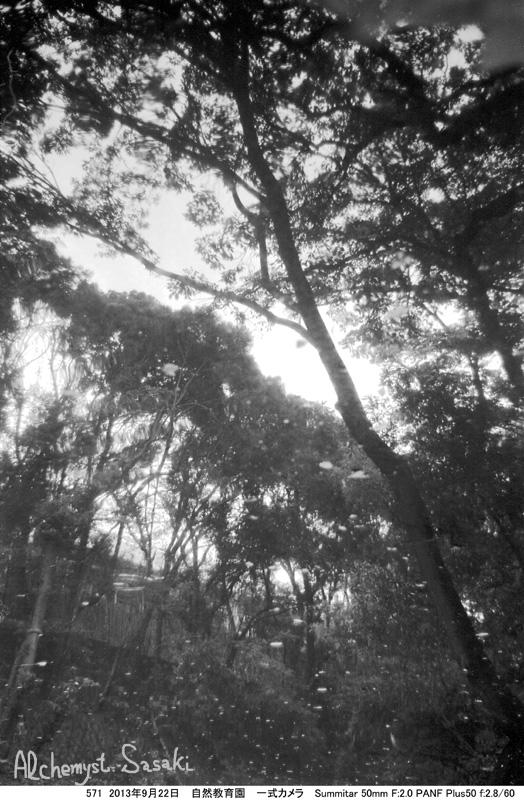 自然教育園517-5