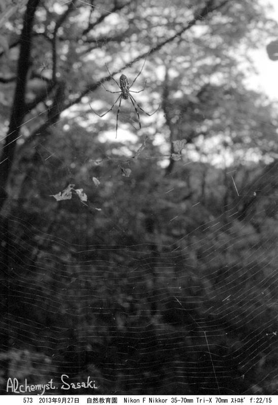 蜘蛛573-7a