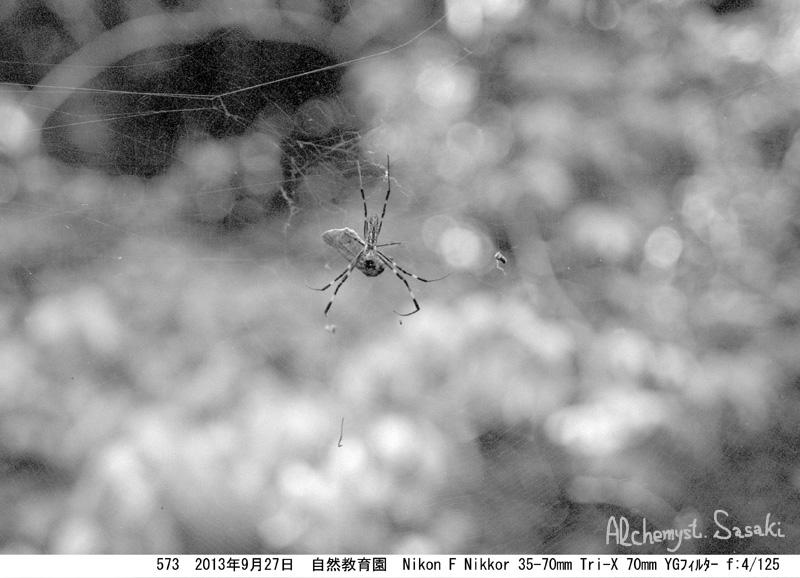 蜘蛛573-12a