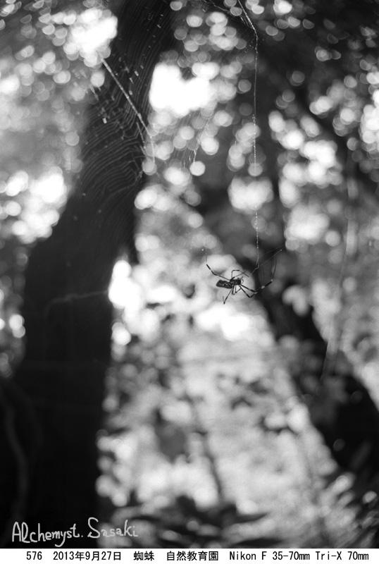 蜘蛛576-3b
