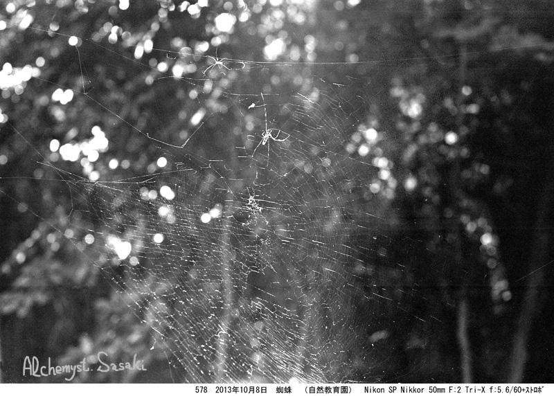 蜘蛛578-13a