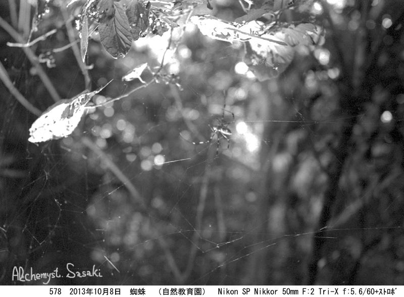 蜘蛛578-18a