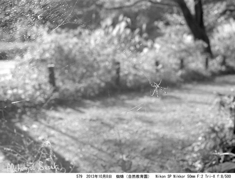 蜘蛛579-5
