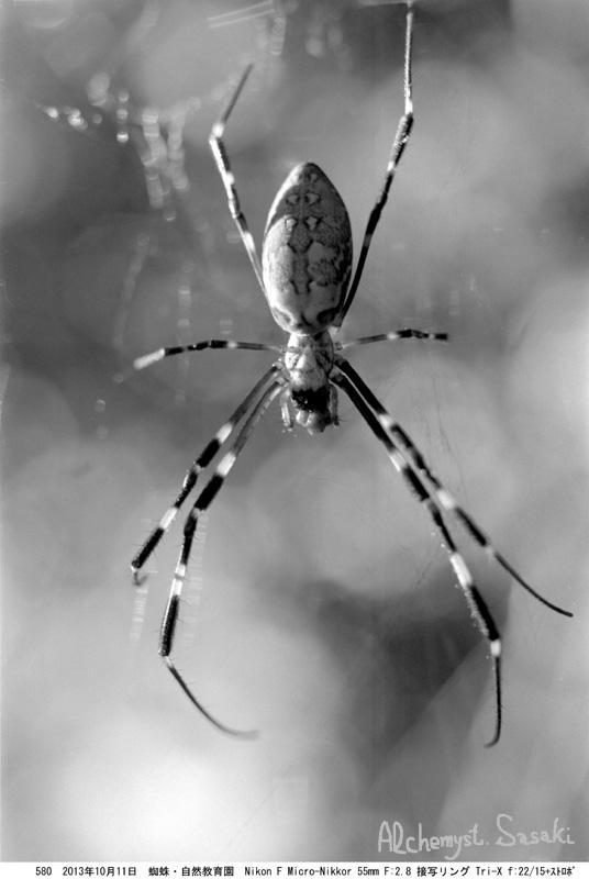 蜘蛛580-15