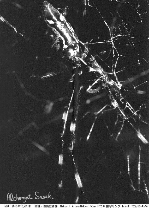 蜘蛛580-13