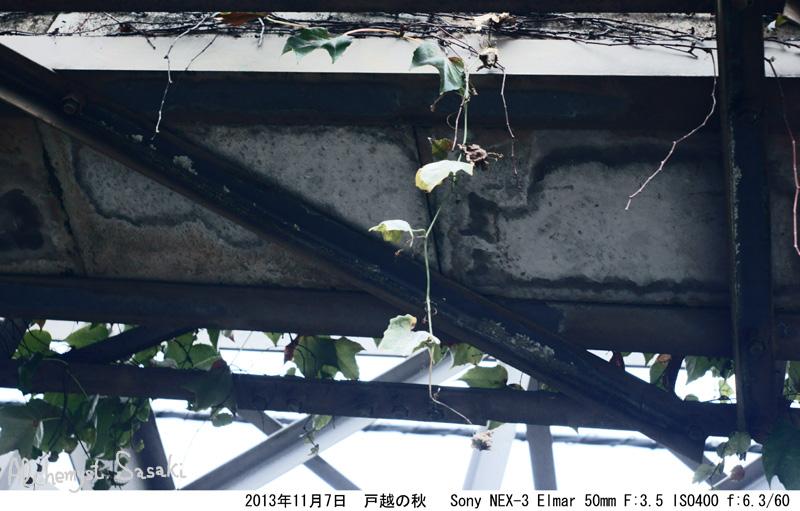 戸越の秋DSC02297