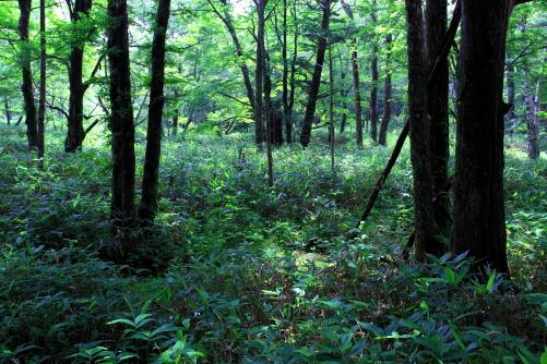 明神池付近の深い森