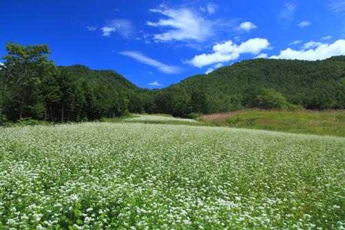 山に囲まれたそば畑