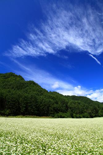 そば畑に雲の映える
