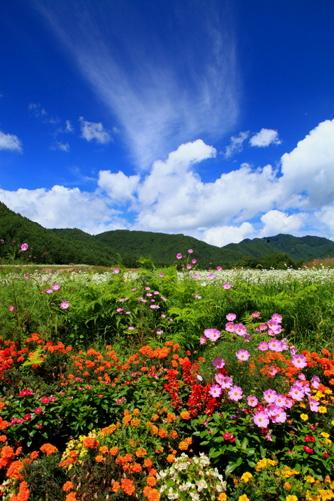 花と雲の彩る風景