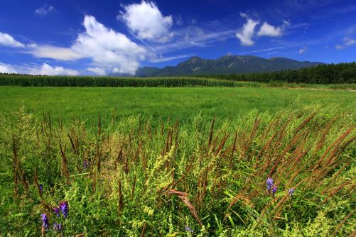 草原とモロコシ畑と夏雲わく八ヶ岳