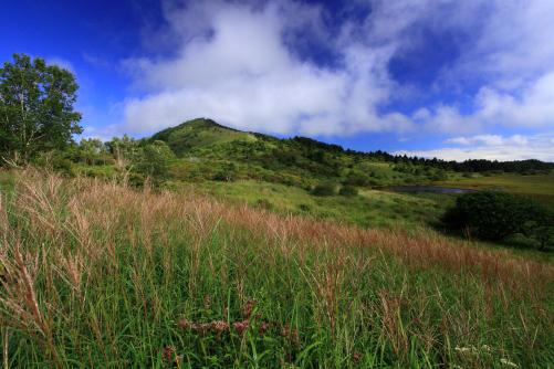 ススキの草原と八島湿原
