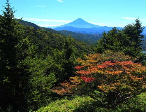 紅葉始まるモミジと霊峰富士