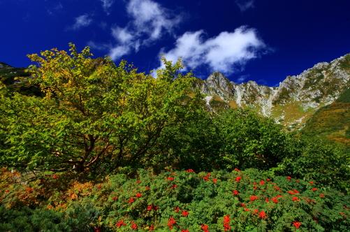 ナナカマドの赤い実と宝剣岳