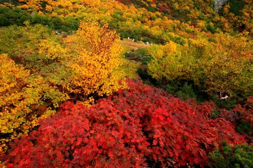 紅葉彩る千畳敷カール