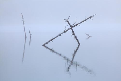 湖面に枯木
