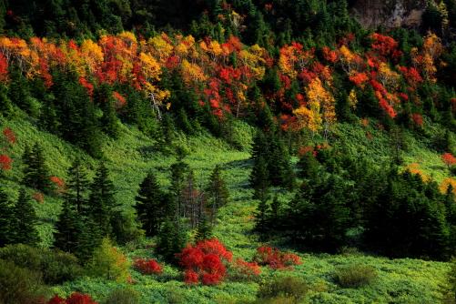 クマザサの草原と紅葉の林