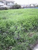 grass01