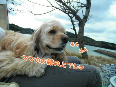 048_2013102122493478f.jpg