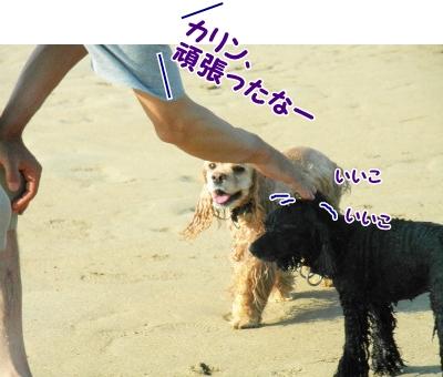 179_20130820215010cb8.jpg
