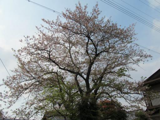 130502-ryokou03.jpg