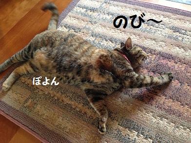 IMG_1608.jpg
