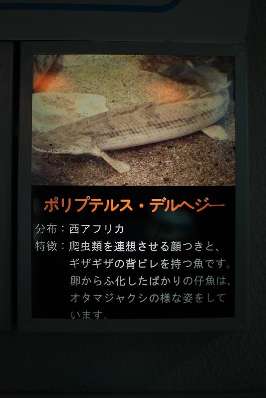 DSC_0572.jpg